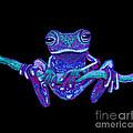 Purple Ghost Frog by Nick Gustafson