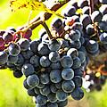 Purple grapes by Elena Elisseeva