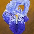 Purple Iris by Xenia Sease