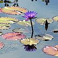 Purple Mirror by