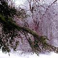 Purple Morning Frost by Darlene Bell