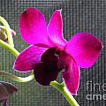 Purple Orchid Aglow by Theresa Willingham