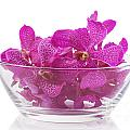 purple orchid in glass bowl by ATIKETTA SANGASAENG