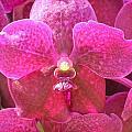 Purple Orchid by Rima Geleziunas