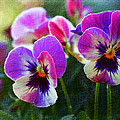 Purple Pansies by Heidi Smith