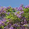 Purple Prelude by Georgiana Romanovna