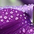 Purple Rain by Debra Straub