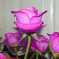 Purple Roses by Heather Fitzgerald