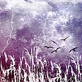 Purple Skies by Ellen Heaverlo