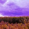 Purple Sky by Lora Mercado