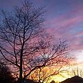 Purple Sunset by Corinne Elizabeth Cowherd