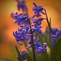 Purple Sunset by Steven Richardson