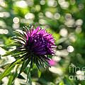 Purple  by Susan Herber