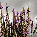 Purple Wildflowers  by Darleen Stry