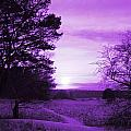 Purple Winter by Charlotte Therese Bjornstrom
