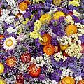 Purple Yellow Orange White Cut Flowers by Cherokee Blue