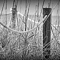 Pylons On The Beach by Joe Freeman