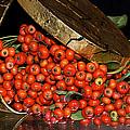 Pyracantha Berries by Phyllis Denton