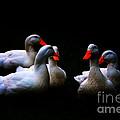 Quackery Quintet by Ola Allen