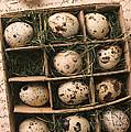 Quail Eggs In Box by Garry Gay