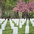 Quantico National Cemetery by JC Findley