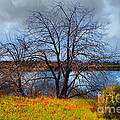 Quarry Lakes In Fremont California . 7d12636 by Wingsdomain Art and Photography