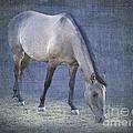 Quarter Horse In Blue by Betty LaRue