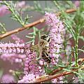 Queen Bee by Melisa Crook