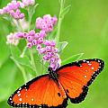 Queen Butterfly Wings With Pink Flowers by Bill Dodsworth
