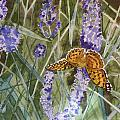 Queen Of Spain Fritillary And Lavender II by Marty Bielefeldt