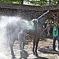 Quick Shower Before The Race by Alice Gipson