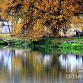 Quiet Autumn Day by Carol Groenen