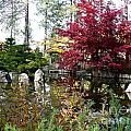 Quiet Autumn Pond by Carol Groenen