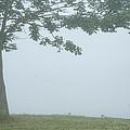 Quiet Fog Rolling In by Karol Livote