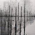 Quiet Morning by Jack Diamond
