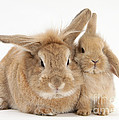 Rabbit And Baby Rabbit by Mark Taylor