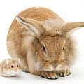 Rabbit And Dwarf Hamster by Mark Taylor
