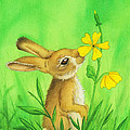 Rabbit And Flower by Stacy Drum