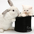Rabbit And Kitten In Top Hat by Mark Taylor