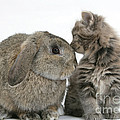 Rabbit And Kitten by Mark Taylor