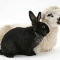 Rabbit And Lamb by Mark Taylor