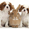 Rabbit And Puppies by Mark Taylor