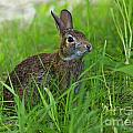 Rabbit Eating Grass In The Forest by Inspired Nature Photography Fine Art Photography
