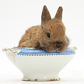 Rabbit In A China Bowl by Mark Taylor