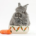 Rabbit In A Food Bowl With Carrot by Mark Taylor