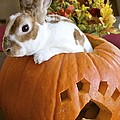 Rabbit Joins The Harvest by Alanna DPhoto