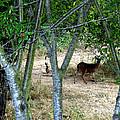 Rabbit Spying On Buck In Velvet by The Kepharts