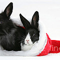 Rabbits In Hat by Mark Taylor