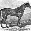 Racehorse, 1867 by Granger