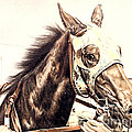 Racehorse by Gail Dolphin